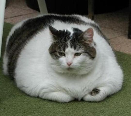 Le conseil du mois : Lutter contre l'obésité des animaux de compagnie